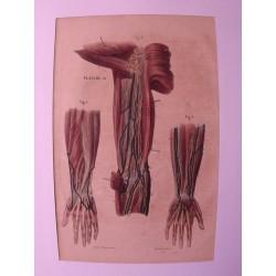 """10 lithographies Colorièes a la main """" Le Corps de l'Homme """" du Dc Galet"""